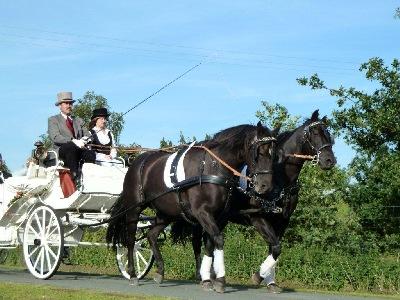 pferd ohne flügel osnabrück